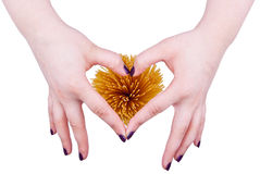 I love spaghetti. Female hands in shape of heart around spaghetti Stock Images