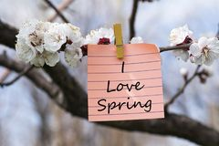 I love spring in memo. Pined on tree with blooms Stock Images