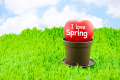 I love spring word on red heart on flower pot at meadow with blu Royalty Free Stock Photos
