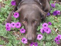 Spring Flowers around a Dog Stock Photos