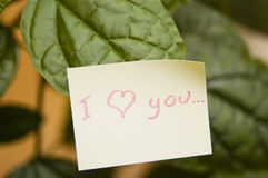 I love you. Written on sticky paper on green leaves stock photography