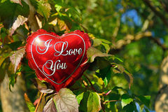 I love you ballon on autumn leaves background Stock Images