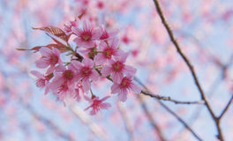 I Love You... Devi Tigress Flower Stock Images