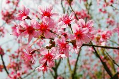 I Love You... Devi Tigress Flower Royalty Free Stock Photos