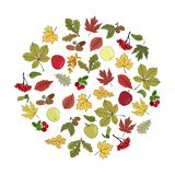 Circle made of hand sketched different leaves. stock illustration