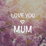 I love you mum card Stock Photos