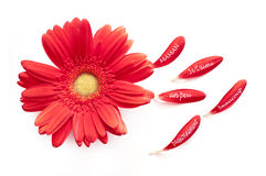 I love you Mum, written in French on a red daisy flower Stock Photography