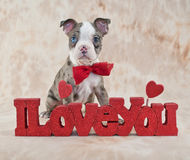 I Love You Puppy Stock Image