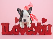 I Love You Puppy Royalty Free Stock Image
