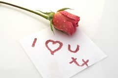 I love you rose. Rose on white I love you card royalty free stock photo