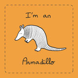 I'm an Armadillo Stock Photo