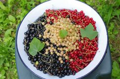 Black, red and white currant stock photo