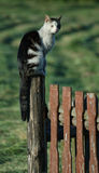 I'm looking after. Cat, country, countryside, fence, green, grey, observation point, village, sit Stock Photography