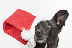 I'm not a Santa Claus Stock Image