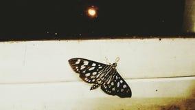 I& x27 ; m prêt à voler haut dans le ciel Images libres de droits