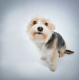 I'm sorry. Lovely dog beg pardon top view Stock Photography