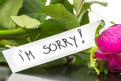 I'm sorry. Message on a pink rose Royalty Free Stock Image