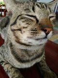 I M-tiger Arkivbilder
