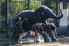 I Mahouts lavano il loro elefante al tempio della reliquia sacra del dente prima del Esala Perahera a Kandy nello Sri Lanka fotografie stock