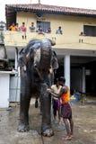 I Mahouts lavano un elefante all'interno del tempio di Kataragama a Kandy immagine stock libera da diritti