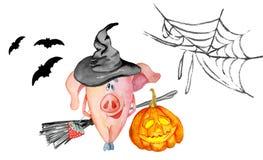 I maiali svegli con le zucche raccolgono l'acquerello disegnato a mano 2019 del modello di ringraziamento royalty illustrazione gratis