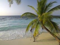 I Maldives nell'Oceano Indiano Fotografie Stock Libere da Diritti