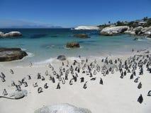 I massi del santuario del pinguino tirano immagini stock