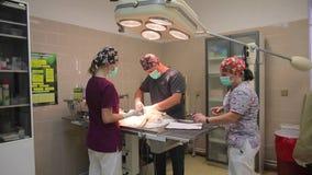 I medici veterinari nella clinica del veterinario sul lavoro archivi video