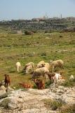 Agricoltura mediterranea Fotografia Stock Libera da Diritti