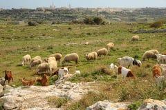 Moltitudine mediterranea Fotografia Stock