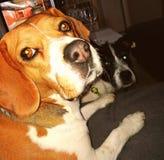 I miei cani fotografia stock