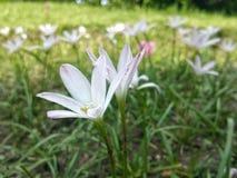 I miei fiori Fotografia Stock