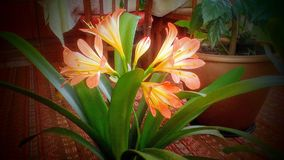 I miei fiori Fotografie Stock