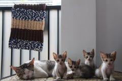 I miei gatti Fotografie Stock