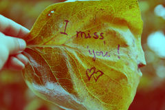 I miss you on old leaf Stock Photo