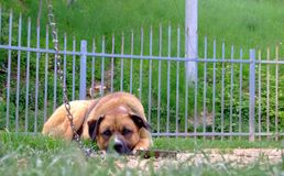 I missing you!. Sad dog looking on the camera Royalty Free Stock Photography