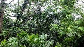 I mitt av den djupa tropiska rainforesten Royaltyfria Bilder