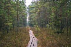 I mitt av ingenstans - lettiskt träsk Arkivbild