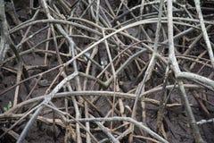 I modelli astratti della mangrovia Immagine Stock