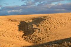 I modelli di mosaico di un giacimento di grano del taglio riflettono verso la fine del sole di pomeriggio Immagine Stock