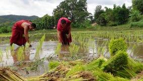I monaci coltivano il riso con gli agricoltori Fotografie Stock Libere da Diritti
