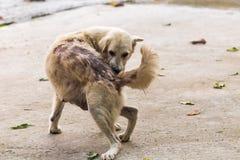 I morsi di cane appoggiano Fotografie Stock