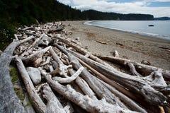 I mucchi degli alberi guasti del driftwood sparpagliano la spiaggia Immagine Stock Libera da Diritti