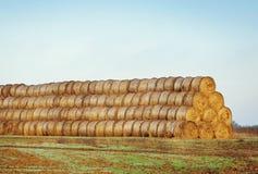I mucchi di fieno o il fieno rotola sul campo Immagine Stock Libera da Diritti