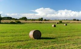 I mucchi di fieno o il fieno rotola sul campo dell'estate Immagini Stock