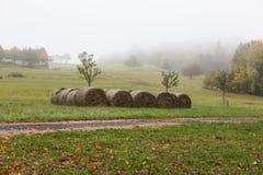 I mucchi di fieno o il fieno rotola sul campo dell'estate Immagine Stock