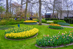 I narcisi gialli e bianchi in Keukenhof parcheggiano, Lisse, Olanda, Paesi Bassi Fotografie Stock