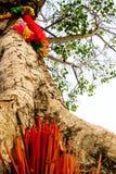 I nastri ed i bastoni colorati di incenso all'albero santo Immagini Stock