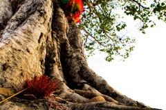 I nastri ed i bastoni colorati di incenso all'albero santo Immagine Stock