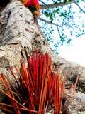 I nastri ed i bastoni colorati di incenso all'albero santo Fotografie Stock Libere da Diritti